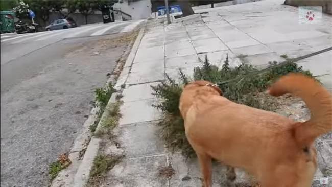Đang đi dạo bị chú chó cưng kéo đến chiếc hộp giấy, cô chủ lo sợ điều nguy hiểm trước khi ngỡ ngàng với cảnh tượng bên trong - Ảnh 1.