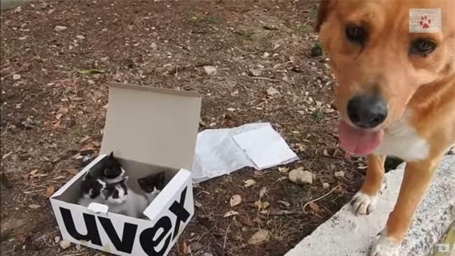 Đang đi dạo bị chú chó cưng kéo đến chiếc hộp giấy, cô chủ lo sợ điều nguy hiểm trước khi ngỡ ngàng với cảnh tượng bên trong - Ảnh 3.