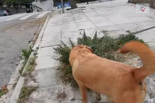 Đang đi dạo bị chú chó cưng kéo đến chiếc hộp giấy, cô chủ lo sợ điều nguy hiểm trước khi ngỡ ngàng với cảnh tượng bên trong
