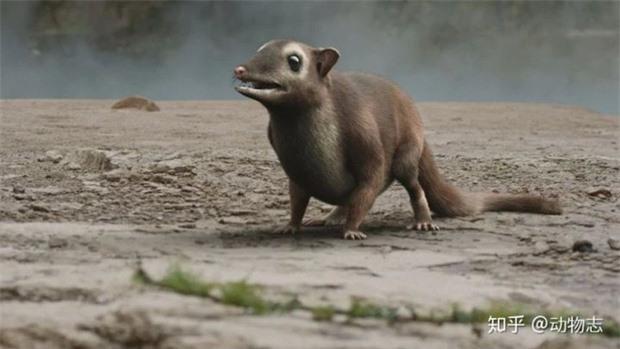 Giải đáp thắc mắc: Loài dơi đã tiến hóa từ con vật gì? Tổ tiên của chúng có phải là loài chuột không? - Ảnh 3.