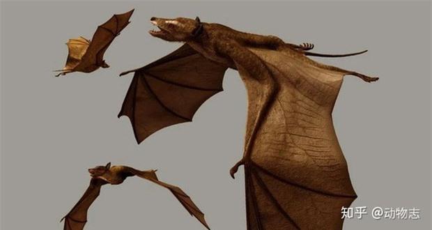 Giải đáp thắc mắc: Loài dơi đã tiến hóa từ con vật gì? Tổ tiên của chúng có phải là loài chuột không? - Ảnh 7.