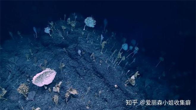 Phát hiện loài bọt biển ET trong Khu rừng kỳ dị ở Thái Bình Dương trông giống như một sinh vật ngoài hành tinh - Ảnh 3.