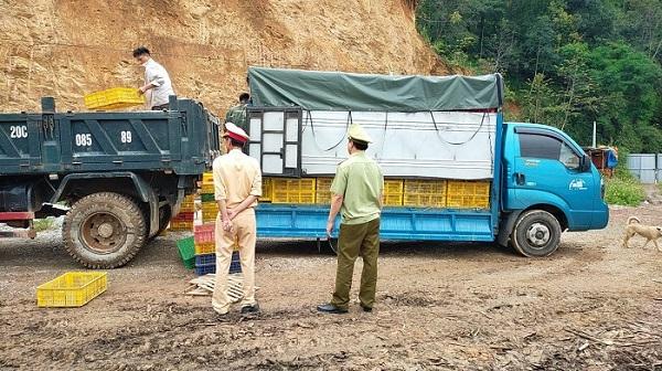 Cao Bằng: Tịch thu, tiêu hủy 12.000 con giống gia cầm không rõ nguồn gốc xuất xứ