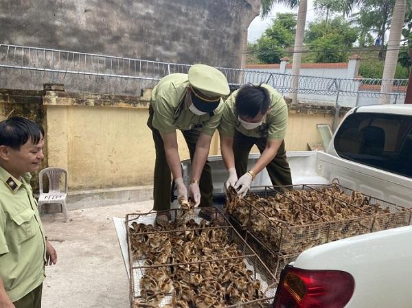 Lang Sơn: Vứt bỏ 6.000 con gà giống khi thấy lực lượng chức năng kiểm tra