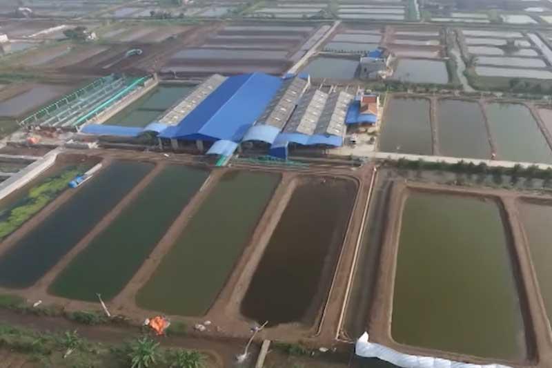Nam Định: Lãi hàng trăm triệu đồng/năm nhờ nuôi cá bống bớp