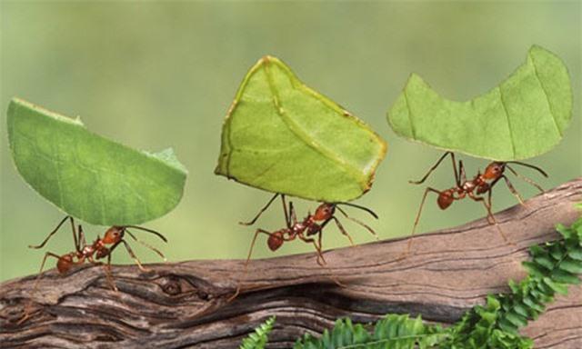 Khả năng của loài kiến đã không còn là một hiện tượng bí ẩn