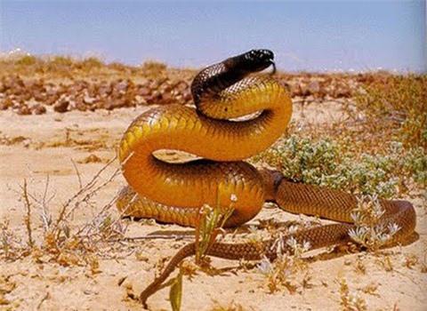 Những loài động vật nguy hiểm nhất thế giới
