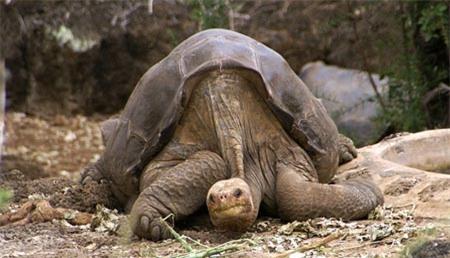 Những loài động vật sống lâu nhất thế giới