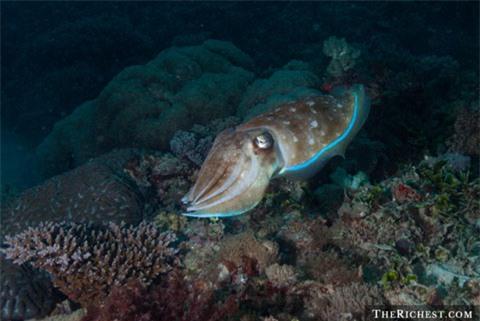 Sinh vật biển có kỹ năng thôi miên kỳ lạ
