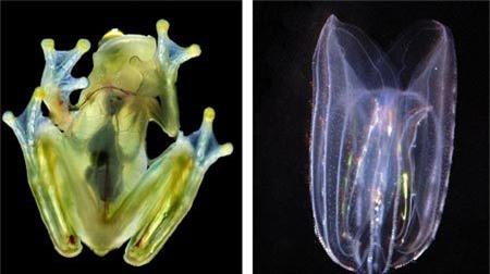 Những sinh vật sinh tồn nhờ biệt tài tàng hình