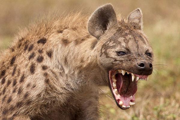 Sự thật đáng sợ về loài động vật 'máu lạnh' vô cùng tàn nhẫn