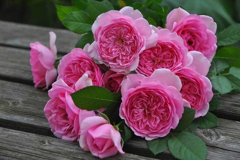 1. Hoa hồng.