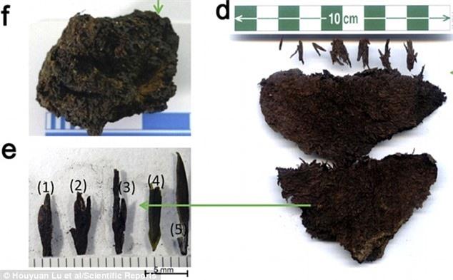 Những lá chè cổ này có ý nghĩa quan trọng trong khảo cổ học