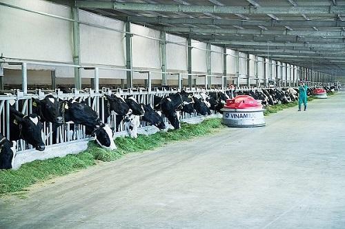 Vinamilk giải bài toán tăng trưởng đi đôi phát triển bền vững cho hệ thống trang trại bò sữa