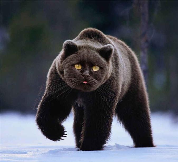 Khi tất cả các loài vật đều có gương mặt giống mèo, trông hư cấu nhưng lại cực kỳ đáng yêu