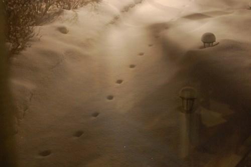 """Những dấu chân xuất hiện và đột ngột biến mất không dấu vết khiến người dân liên tưởng tới """"dấu chân của quỷ"""". Ảnh: Kiến thức"""