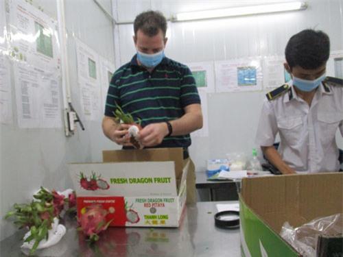 Bưởi Việt sắp được cấp visa sang Mỹ - Ảnh 1.
