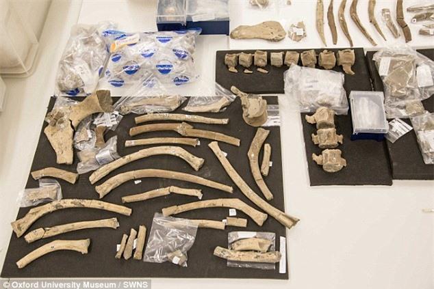 Cổ sinh vật học khai quật được hơn 600 xương hóa thạch của loài quái vật biển.