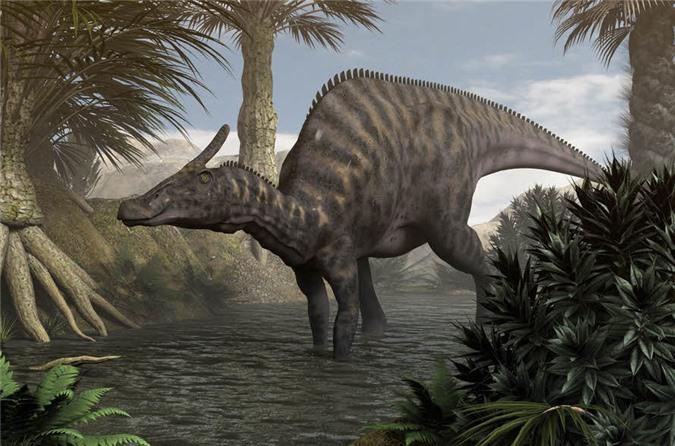 Một con khủng long khổng lồ Saurolophus angustirostris trưởng thành