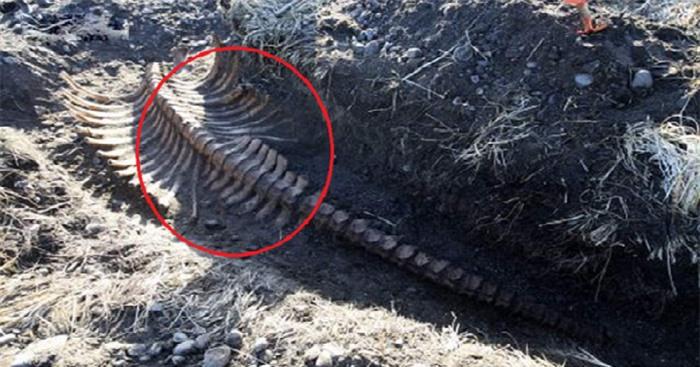 Phát hiện bộ xương không đầu của quái vật biển bí ẩn. Ảnh The Siberian Times