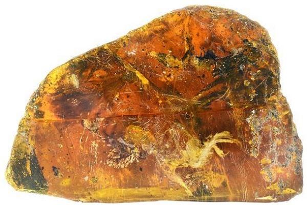 Kinh ngạc với hóa thạch chim non còn nguyên lông và chân từ thời khủng long