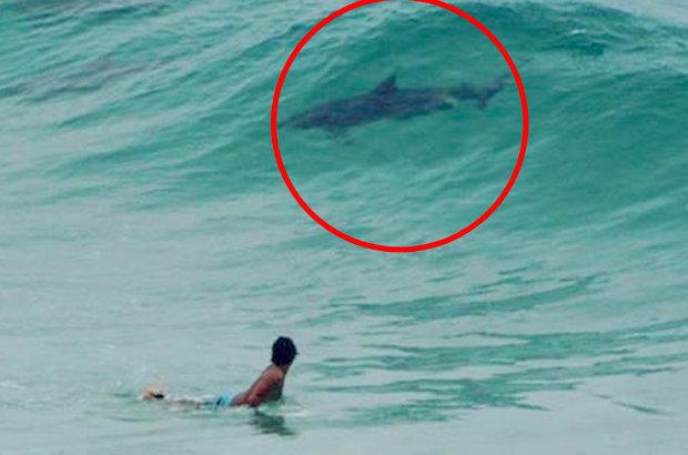 Hình ảnh chụp con cá được cho là đầu cá heo nhưng có đuôi cá mập tại bãi biển Úc. Ảnh: Pháp luật net