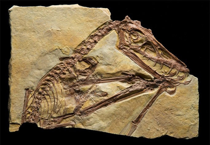 Kinh hoàng quái vật khỏa thân biết bay, ăn thịt cả khủng long - Ảnh 2.