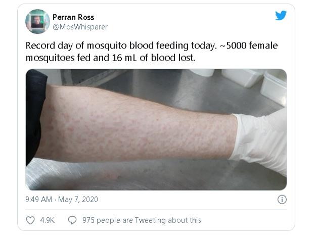 Nhà khoa học để hàng nghìn con muỗi đốt để nghiên cứu điều trị sốt xuất huyết - Ảnh 2.