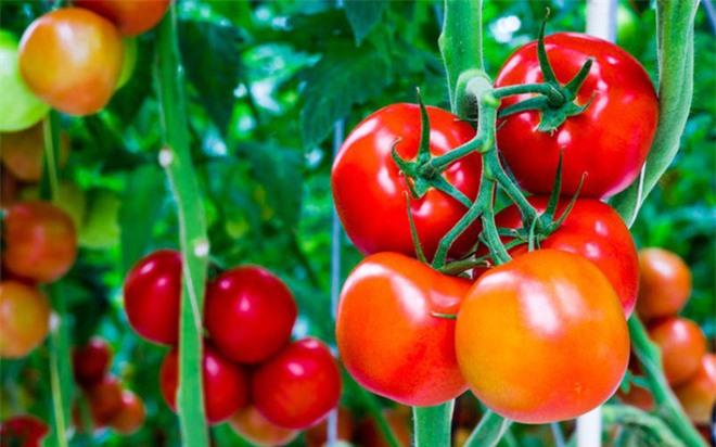 Những thực phẩm cấm kỵ đối với người huyết áp thấp - Ảnh 4.