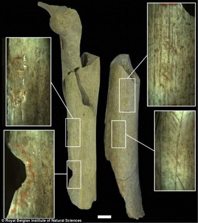 Bằng chứng về bộ tộc ăn thịt người chết, dùng xương làm công cụ