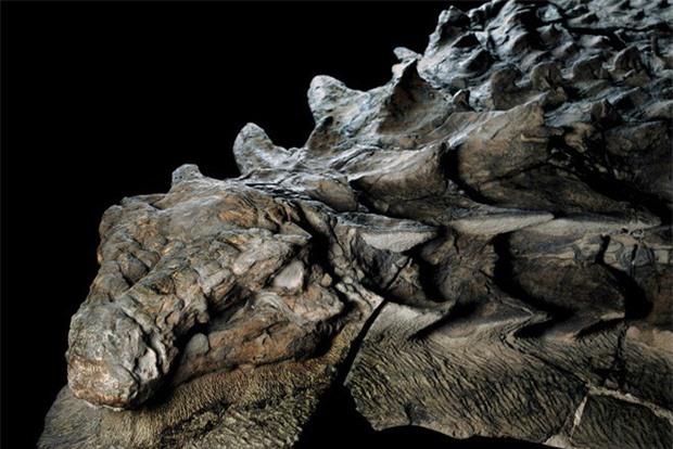 Xác ướp khủng long được bảo quản nguyên vẹn hơn 100 triệu năm có trọng lượng gần như tương tự lúc còn sống - Ảnh 3.