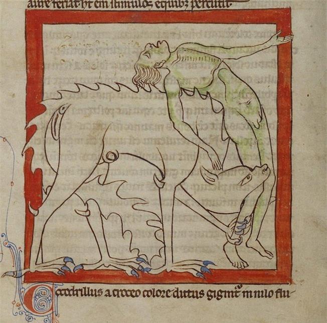 Khi họa sĩ thời Trung Cổ trổ tài vẽ lại động vật qua lời kể, con nào cũng sai trái hết hồn luôn - Ảnh 15.