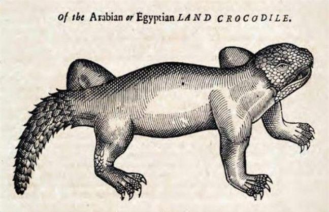 Khi họa sĩ thời Trung Cổ trổ tài vẽ lại động vật qua lời kể, con nào cũng sai trái hết hồn luôn - Ảnh 6.