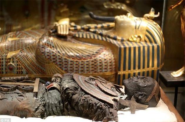 Xác ướp cổ đại có 2 loại nấm mốc cực độc là Aspergillus Niger và Aspergillus Flavus.