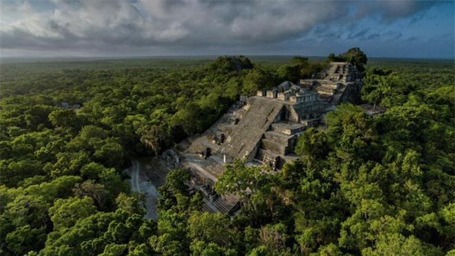 Vào thế kỷ thứ 7, các vị vua rắn cai trị vương quốc tại kinh thành Calakmul (ngày nay là miền nam Mexico). Tại Calakmul, họ đã thiết lập, xây dựng và quản lý một hệ thống liên minh chính trị vô cùng phức tạp. Trong hình là một kim tự tháp cao gần 55 mét.
