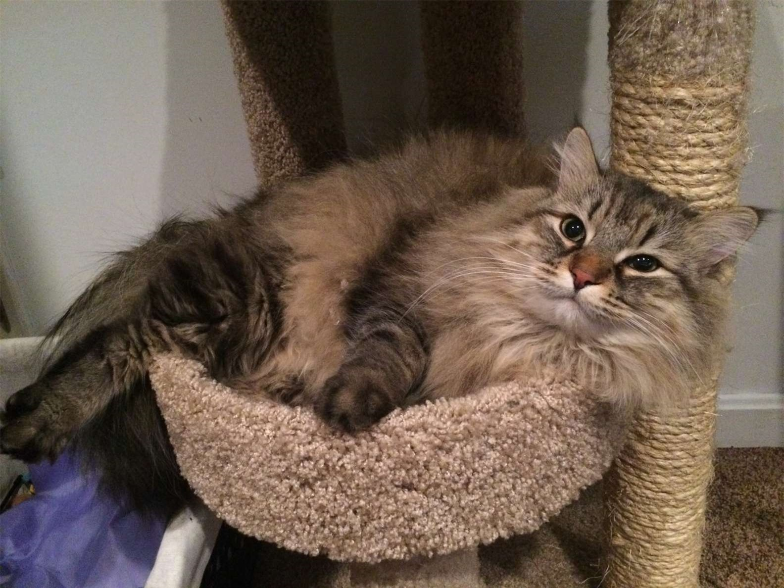 """Mèo cưng lạnh lùng bỗng chuyển hướng yêu thương, cô chủ lấy làm lạ, đến lúc con vật """"vượt quá giới hạn"""" thì mọi chuyện với vỡ lẽ - Ảnh 1."""