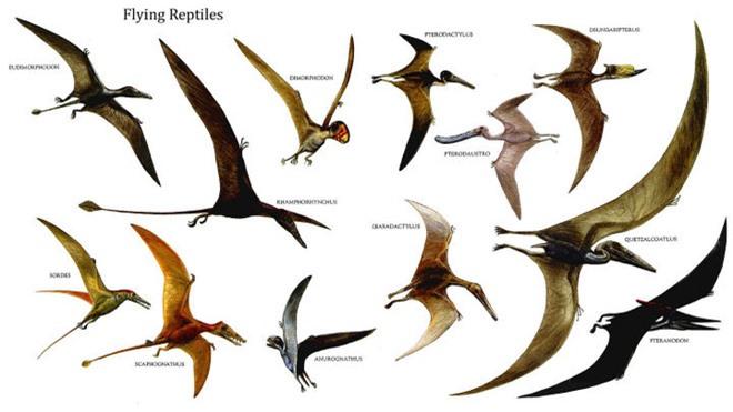 Nguồn gốc của lông vũ có thể sớm hơn những gì chúng ta vẫn biết và cũng không liên quan gì đến việc bay - Ảnh 1.