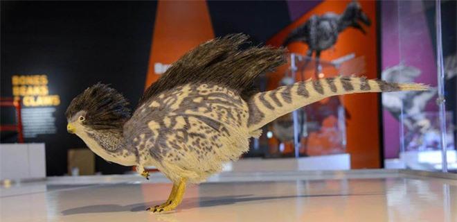Nguồn gốc của lông vũ có thể sớm hơn những gì chúng ta vẫn biết và cũng không liên quan gì đến việc bay - Ảnh 2.
