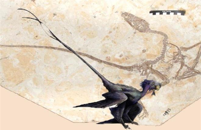 Nguồn gốc của lông vũ có thể sớm hơn những gì chúng ta vẫn biết và cũng không liên quan gì đến việc bay - Ảnh 3.