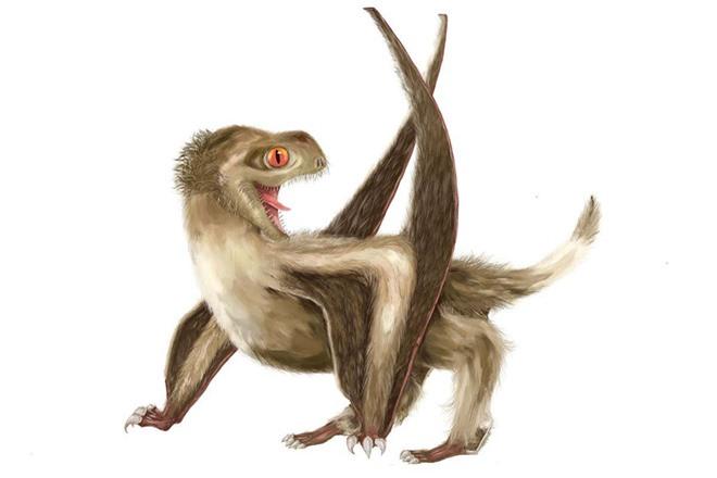 Nguồn gốc của lông vũ có thể sớm hơn những gì chúng ta vẫn biết và cũng không liên quan gì đến việc bay - Ảnh 5.