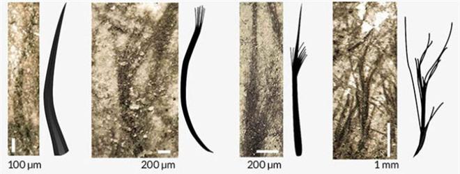 Nguồn gốc của lông vũ có thể sớm hơn những gì chúng ta vẫn biết và cũng không liên quan gì đến việc bay - Ảnh 6.