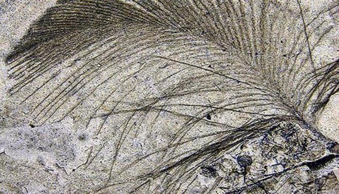 Nguồn gốc của lông vũ có thể sớm hơn những gì chúng ta vẫn biết và cũng không liên quan gì đến việc bay - Ảnh 7.