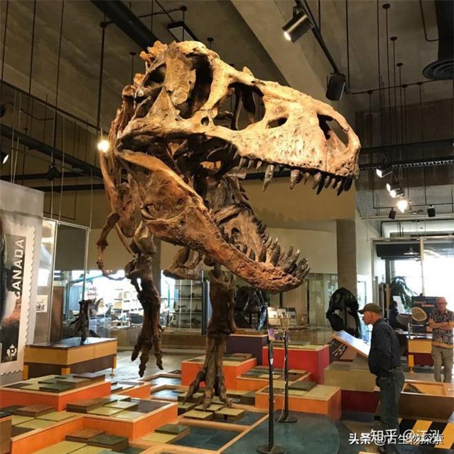 Cuộc đời của khủng long bạo chúa được chia thành 21 giai đoạn, hai trong số đó cực kỳ quan trọng và giúp chúng trở nên to lớn - Ảnh 7.
