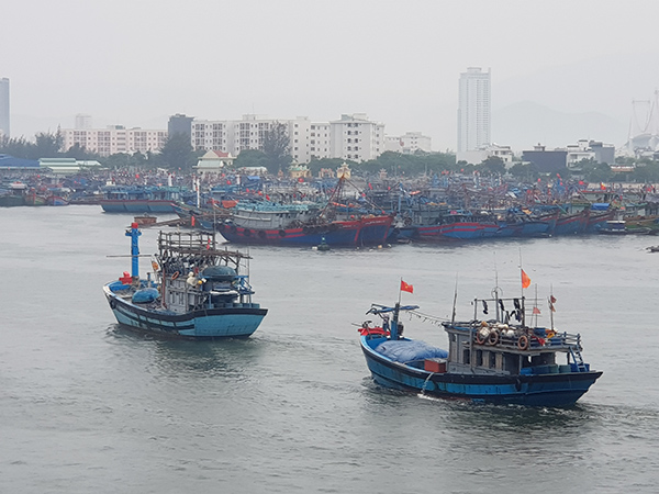 tàu cá của ngue dân Đà Nẵng chạy vào Âu thuyền cảng cá Thọ Quang tránh trú mưa lũ, bão, áp thấp nhiệt đới