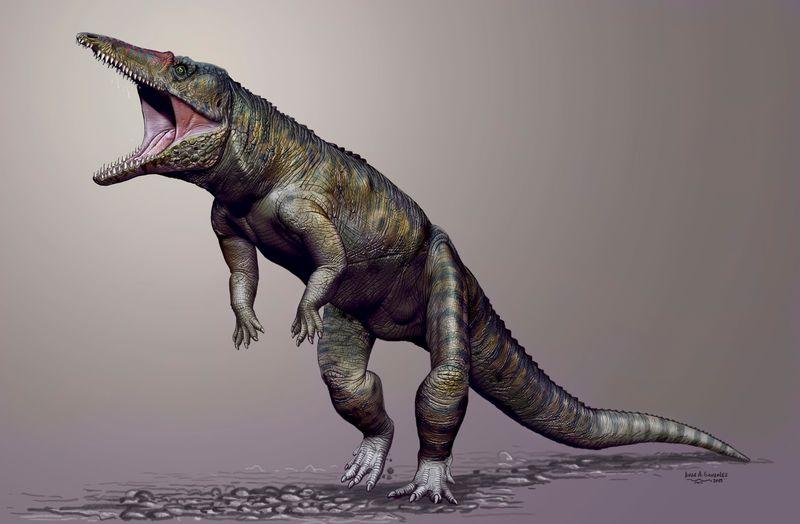 Hóa thạch của loài cá sấu cổ đại này được phát hiện tại Mỹ
