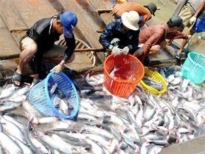 Cá tra loay hoay tìm thị trường tiêu thụ nội địa - Ảnh 1.