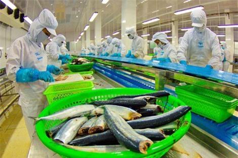 Cá tra loay hoay tìm thị trường tiêu thụ nội địa - Ảnh 2.
