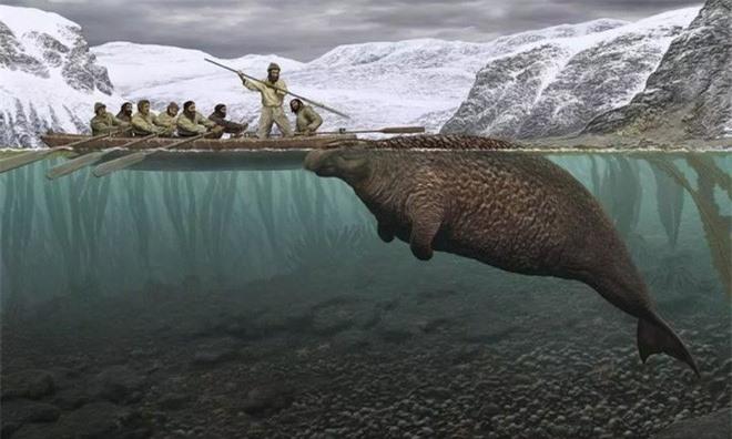 Chỉ mất 27 năm từ khi phát hiện ra đến khi tuyệt chủng, chuyện gì đã xảy ra với con vật khổng lồ dưới biển này? - Ảnh 1.