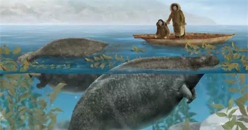 Chỉ mất 27 năm từ khi phát hiện ra đến khi tuyệt chủng, chuyện gì đã xảy ra với con vật khổng lồ dưới biển này? - Ảnh 17.