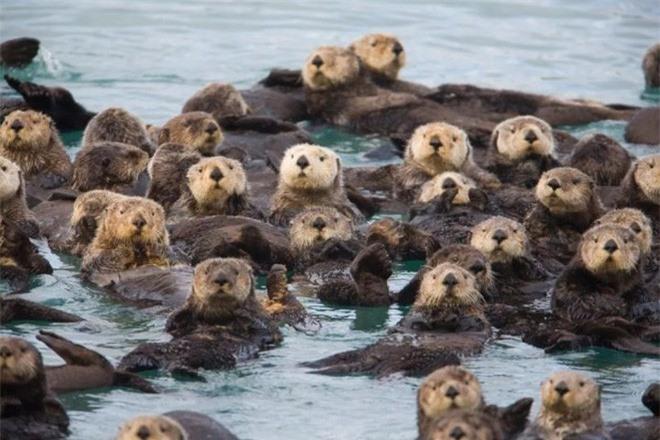 Chỉ mất 27 năm từ khi phát hiện ra đến khi tuyệt chủng, chuyện gì đã xảy ra với con vật khổng lồ dưới biển này? - Ảnh 7.